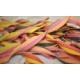 Handmade Reginelle Multicoloured Ribbon Artisan Pasta 250gm.